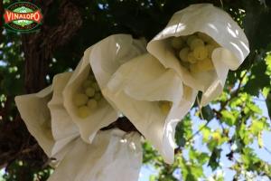 tradición de las 12 uvas